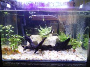 Buying aquarium supplies at Cartimar